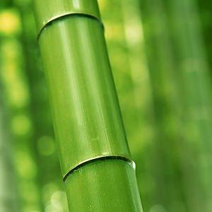 竹林の壁紙(iPad3用/2048×2048)