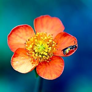 花と蜜蜂の壁紙(iPad3用/2048×2048)