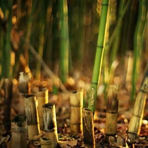 竹やぶの壁紙(iPad3用/2048×2048)