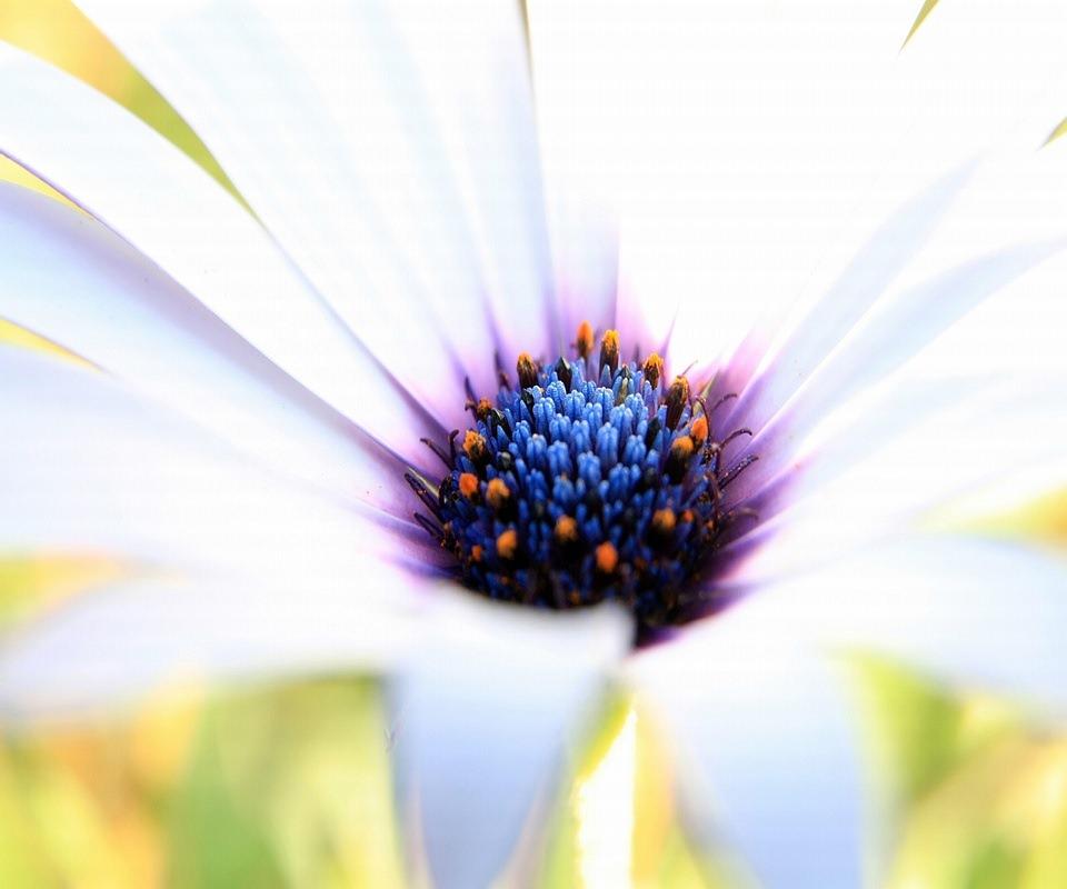 綺麗な花のスマホ用壁紙(Android用/960×854)