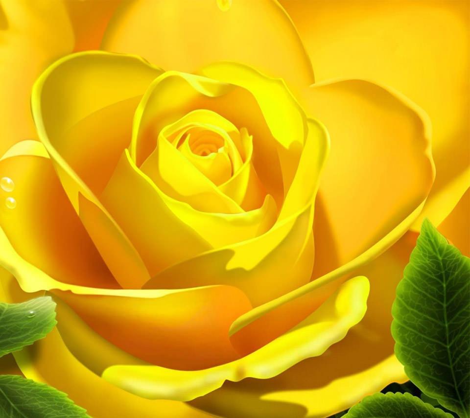 黄色い薔薇のスマホ用壁紙(Android用/960×854)