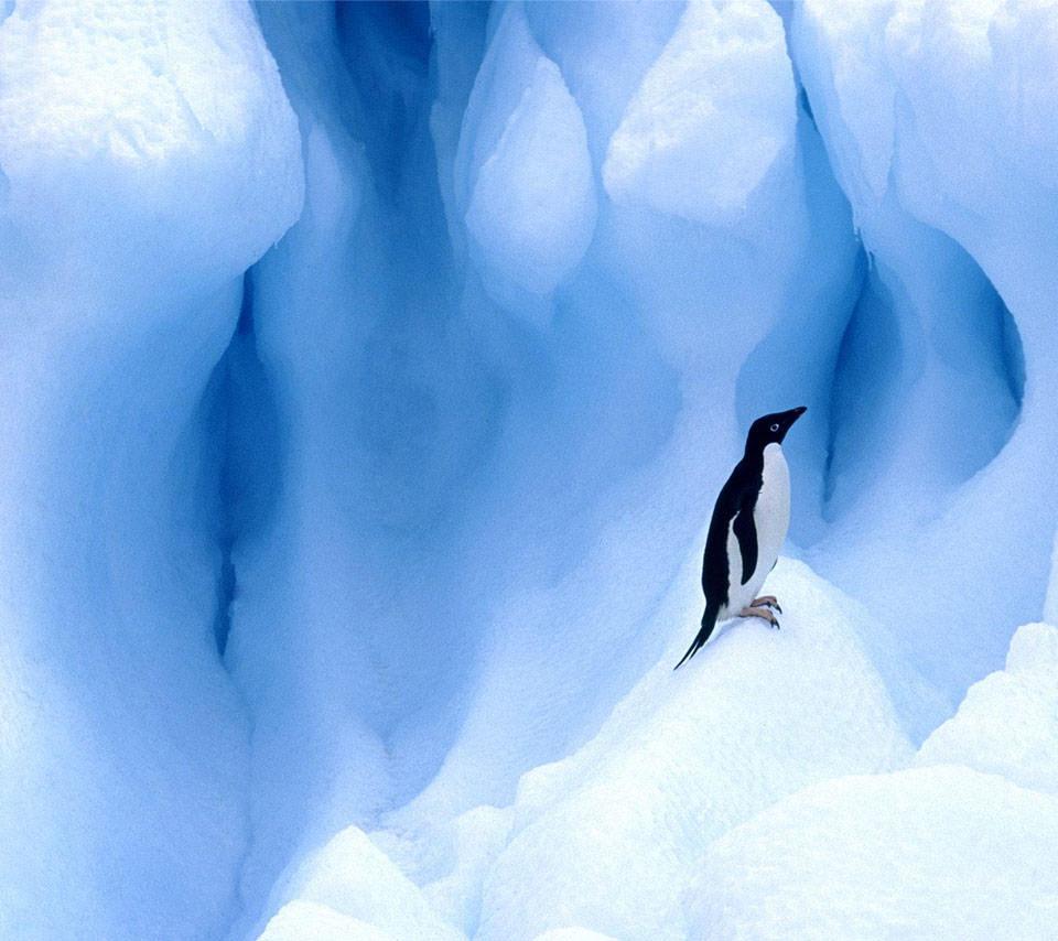 かわいいペンギンのスマホ用壁紙(Android用/960×854)