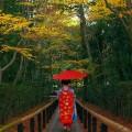 京都の舞妓さん スマホ用壁紙(Android/960×854)