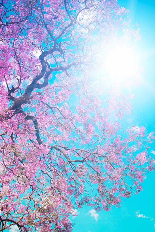 spring wallpapers for pc