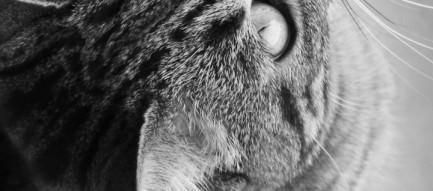 猫の視線 スマホ用壁紙(Android/720×1280)