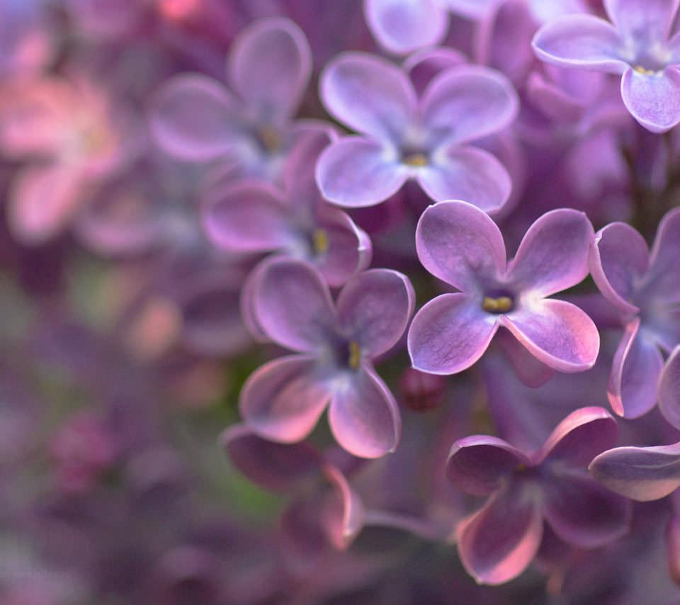 綺麗なピンクの花 スマホ用壁紙(Android/960×854)