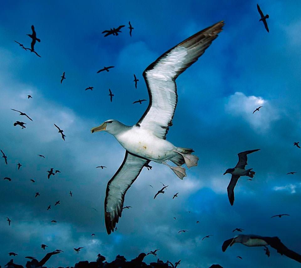 海鳥の島 スマホ用壁紙(Android/960×854)