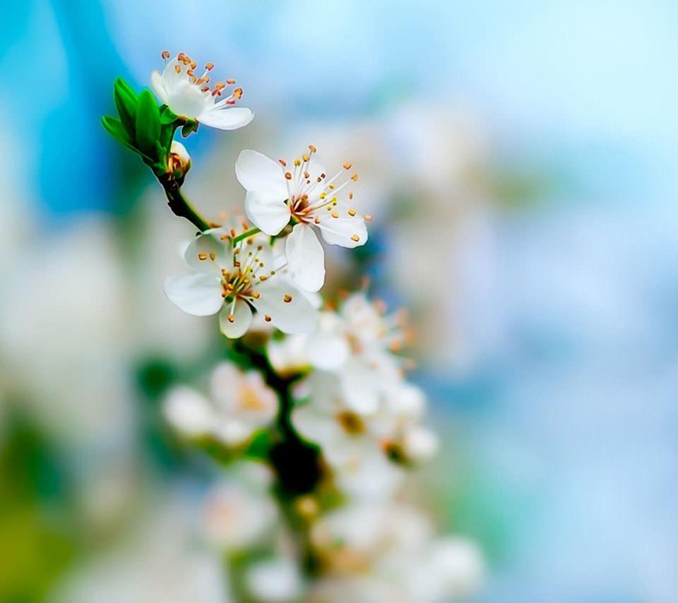 梅の花 スマホ用壁紙(Android/960×854)