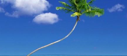 南国 椰子の木 iPhoneスマホ用壁紙