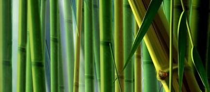 アゲハの竹林 iPhoneスマホ用壁紙