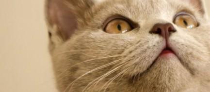 かわいい猫 iPhone5 スマホ用壁紙