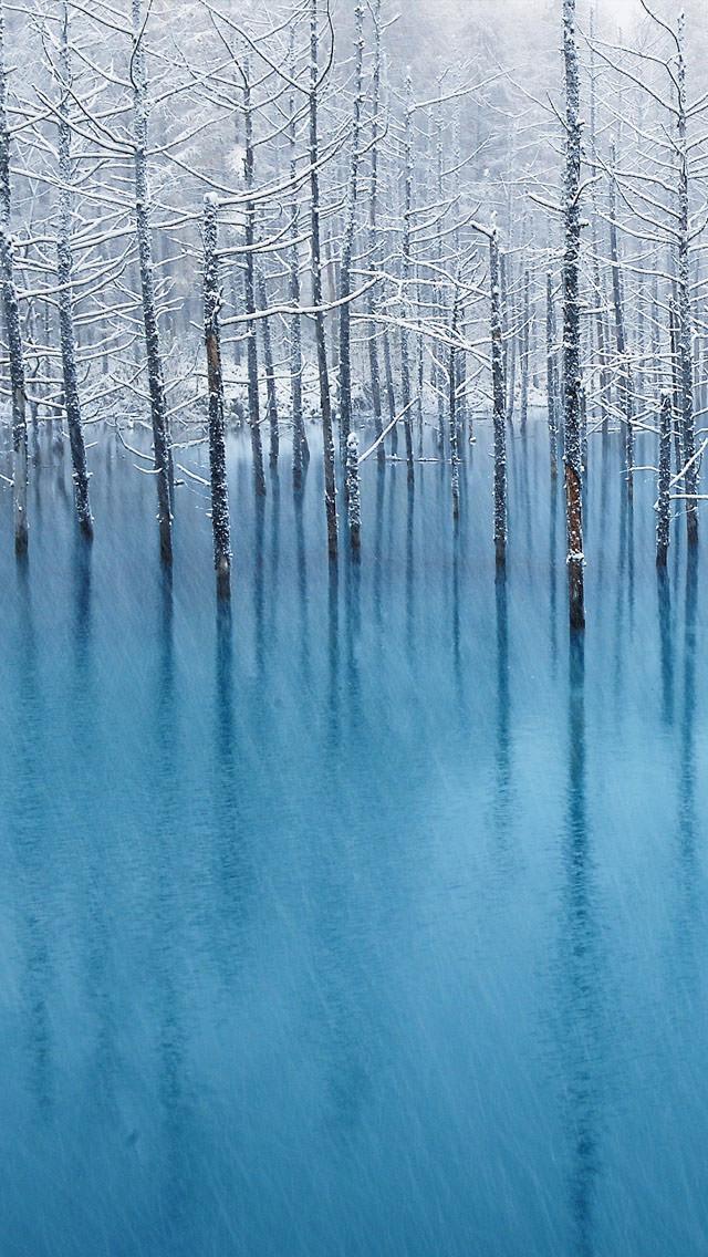 青の林 iPhone5 スマホ用壁紙