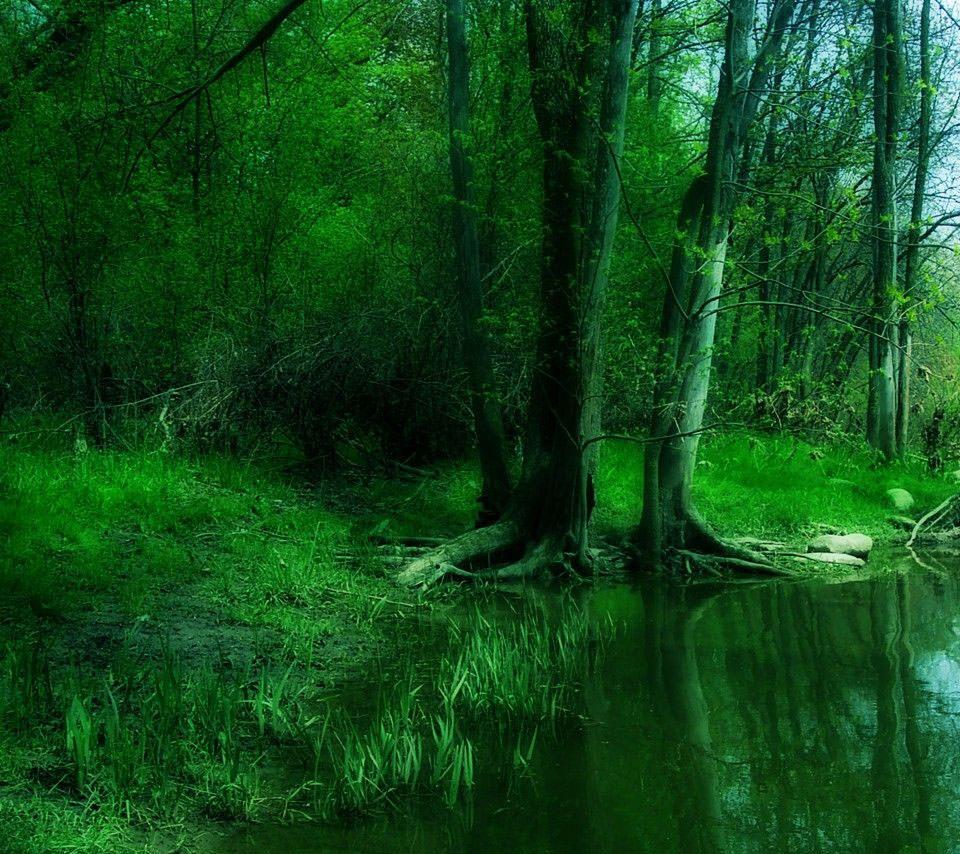 緑の深い森 Androidスマホ用壁紙