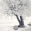 冬景色 Androidスマホ用壁紙