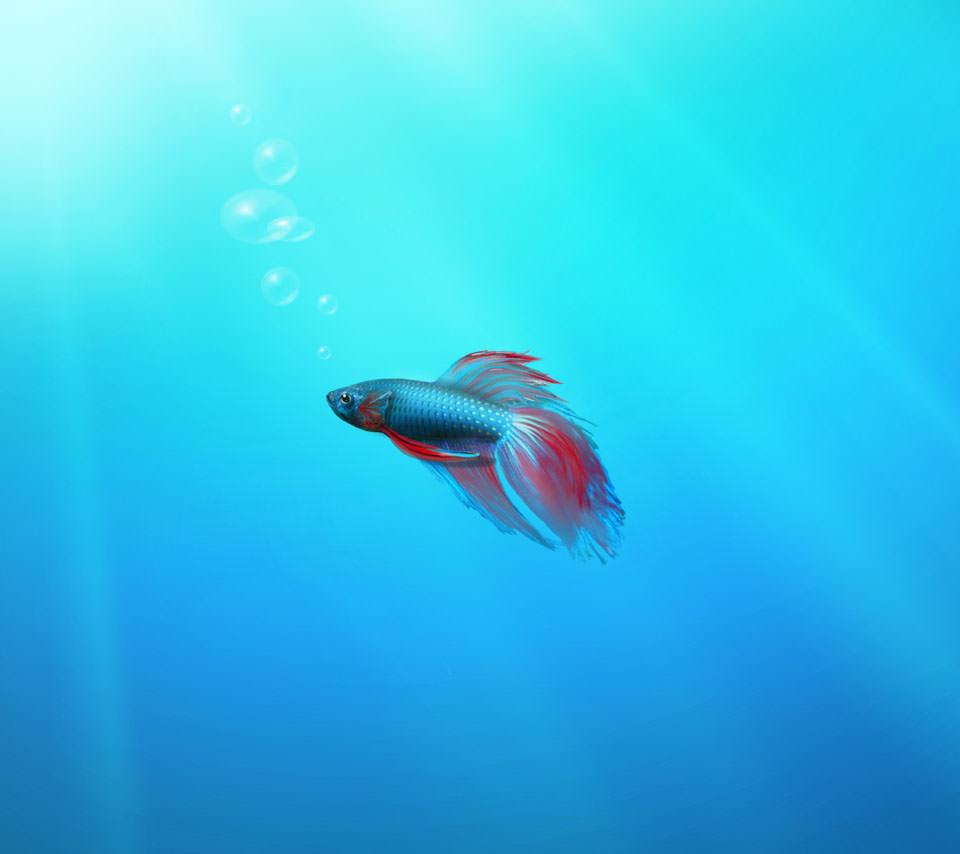 熱帯魚 Androidスマホ用壁紙 Wallpaperbox