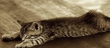 休憩中の猫 Androidスマホ用壁紙