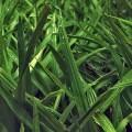 美しい草 iPhoneスマホ用壁紙