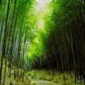 竹の小道 Androidスマホ用壁紙