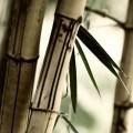 竹 iPhone5 スマホ用壁紙
