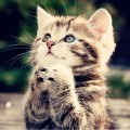 猫まっしぐら Androidスマホ用壁紙