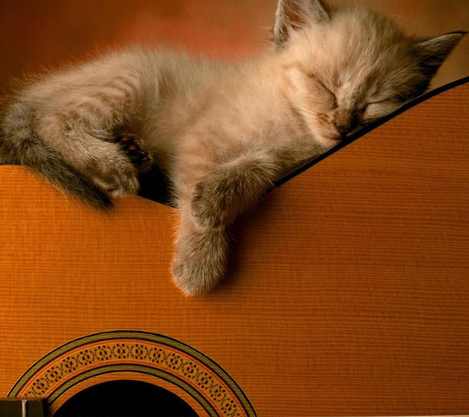 猫とギター Androidスマホ用壁紙