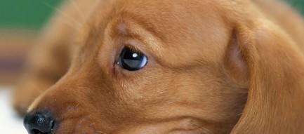 かわいい犬 Androidスマホ用壁紙