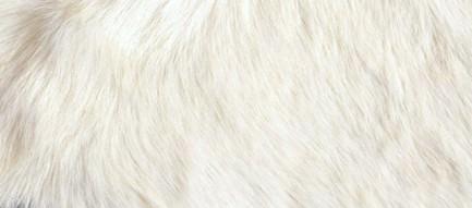 白黒のファー iPhone5 スマホ用壁紙