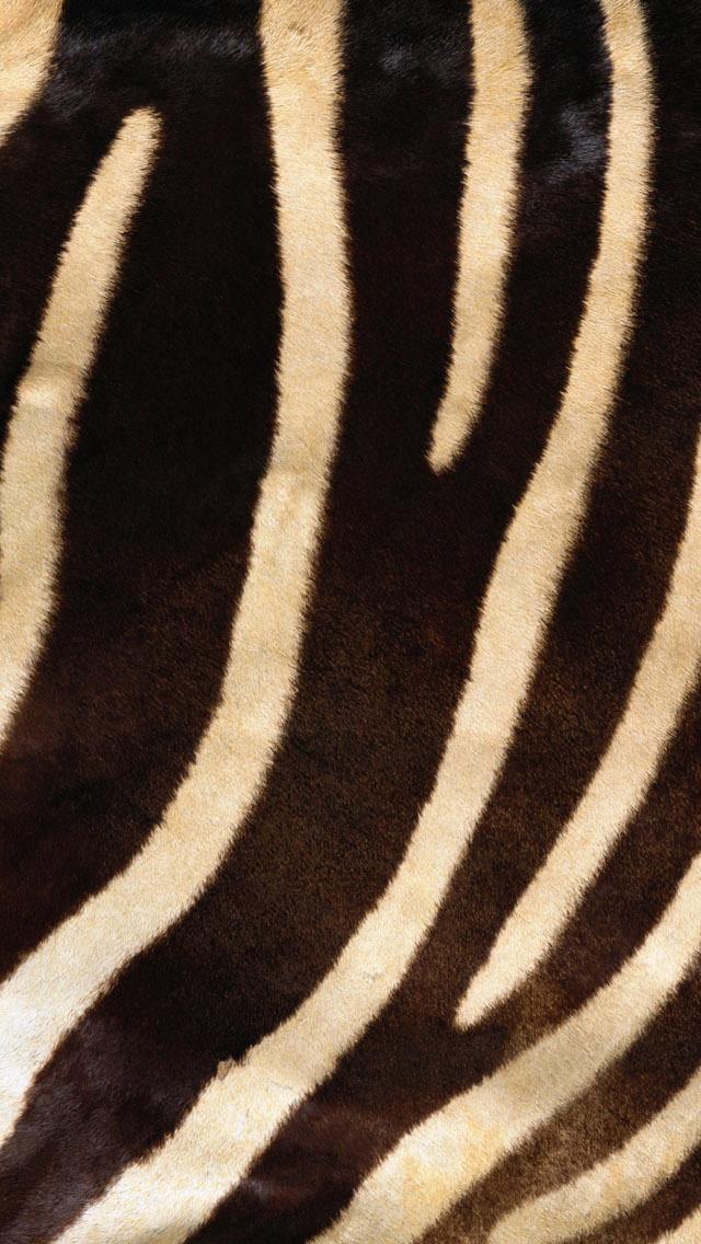 シマウマの毛皮 iPhone5 スマホ用壁紙