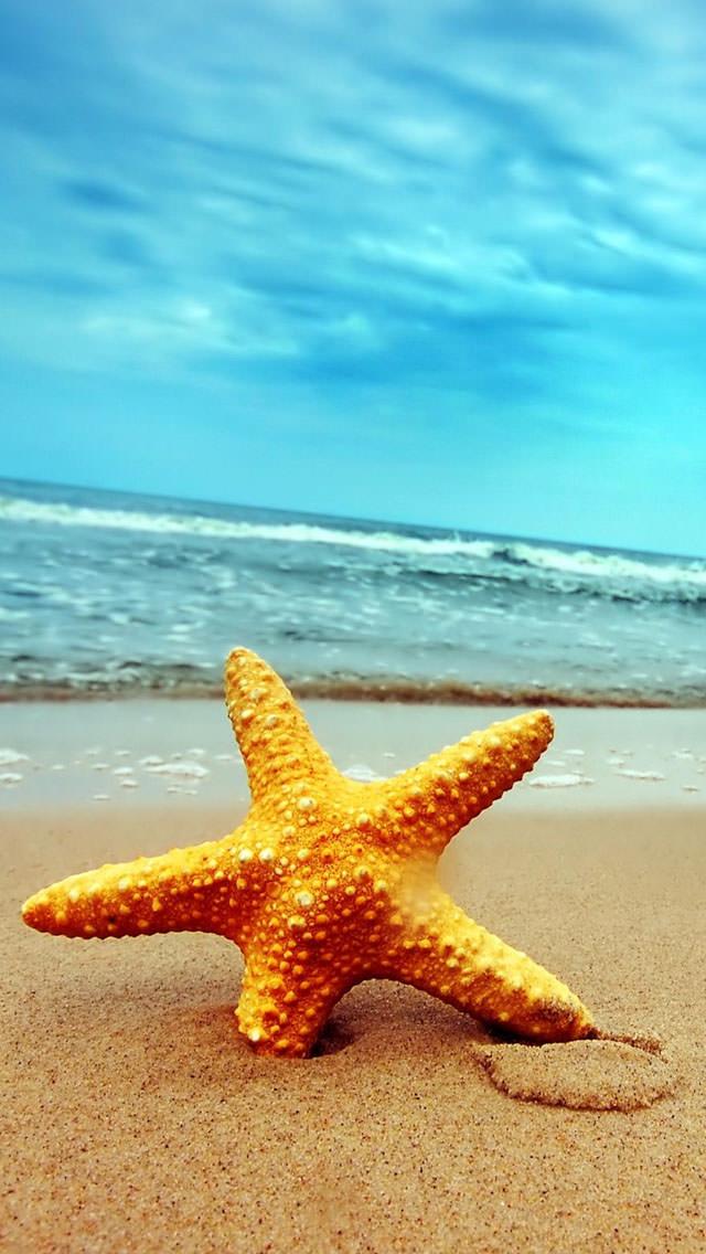 渚のヒトデ iPhone5 スマホ用壁紙