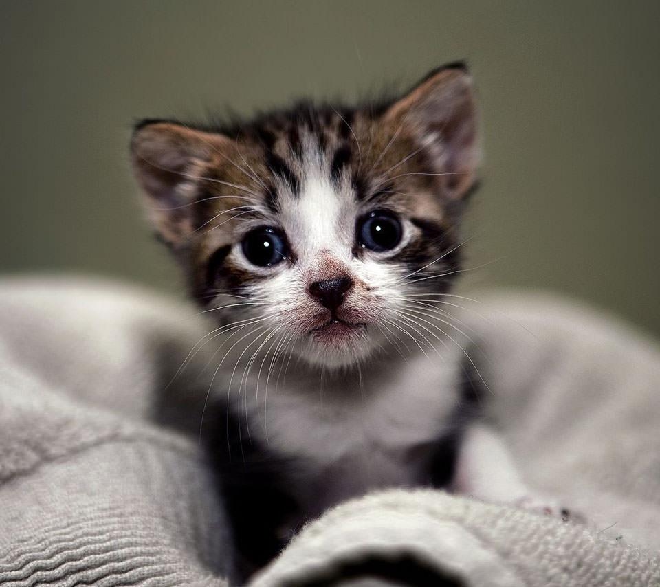 かわいい子猫 Androidスマホ用壁紙