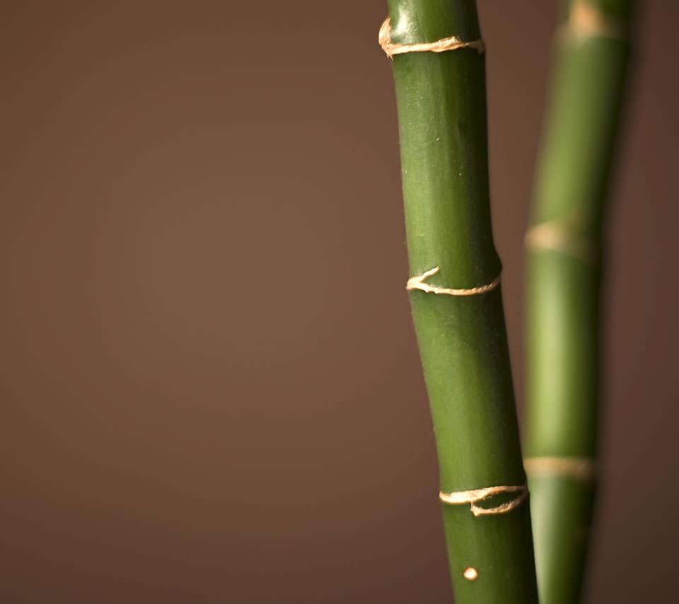 和の竹 Androidスマホ用壁紙