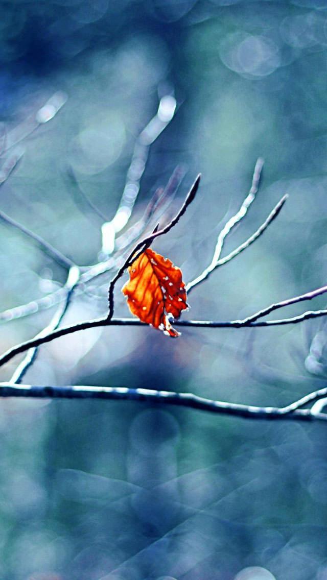 木枯らし吹く風景 iPhone5 スマホ用壁紙