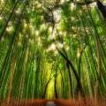 雑木林 Androidスマホ用壁紙