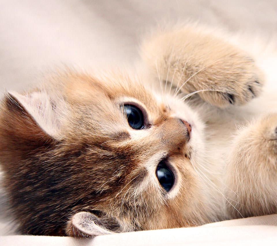 かわいい猫 Androidスマホ用壁紙
