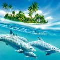イルカの島 Androidスマホ用壁紙