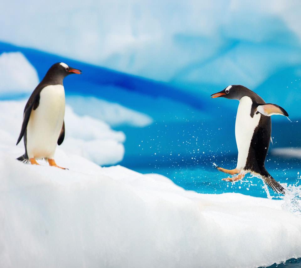 ジャンピング・ペンギン Androidスマホ用壁紙