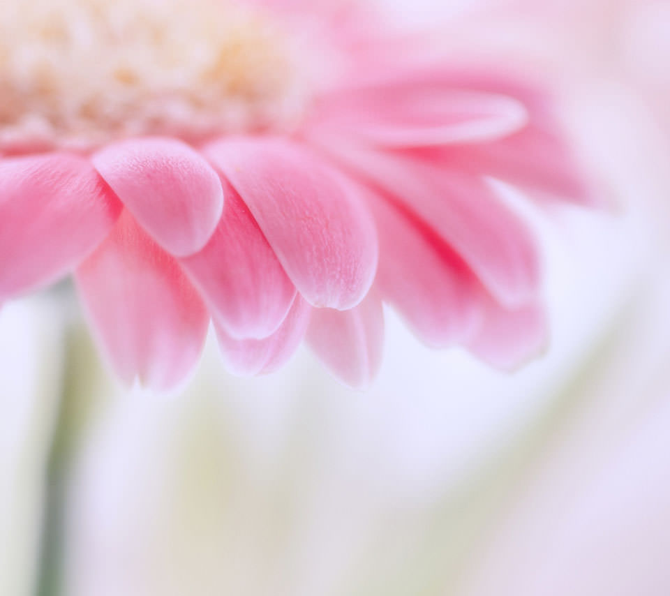 Pink Flower Androidスマホ壁紙 Wallpaperbox