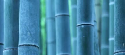 Blue Bamboo Androidスマホ壁紙