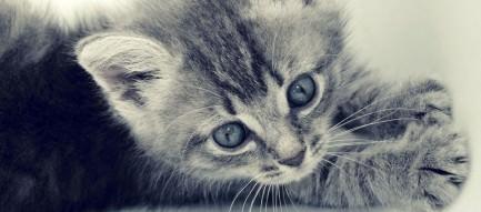 伸びをする猫 Androidスマホ壁紙