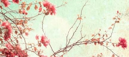 咲き乱れる梅の花 Androidスマホ壁紙