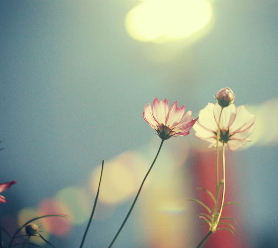 Pinky Flower Androidスマホ壁紙
