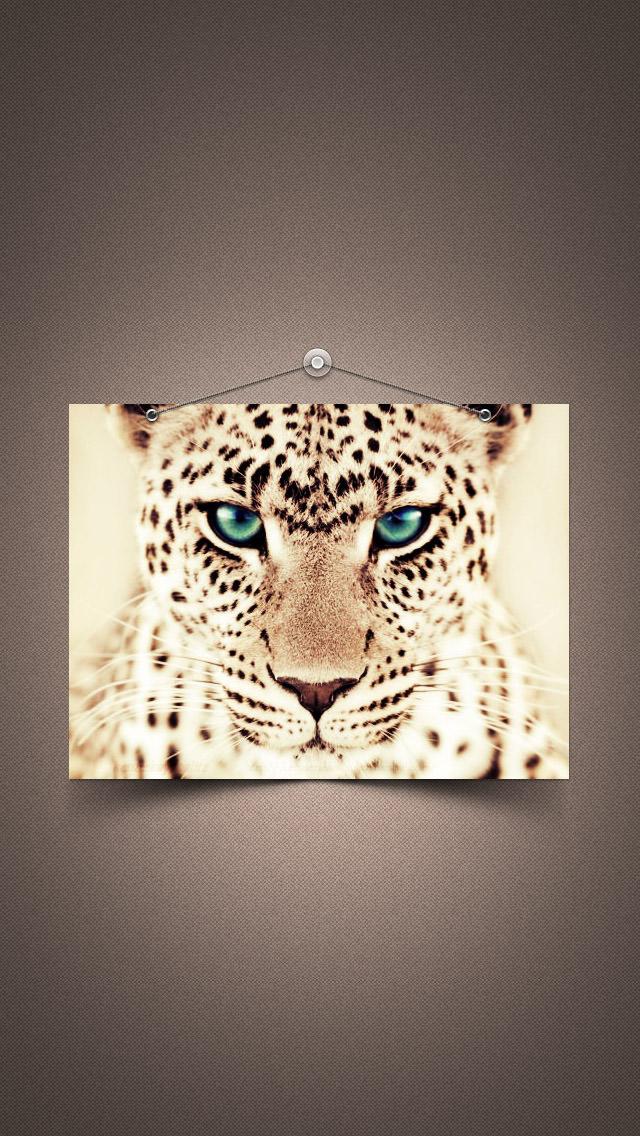 ジャガーの肖像 iPhone5 スマホ用壁紙