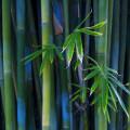 綺麗な竹林 Androidスマホ壁紙