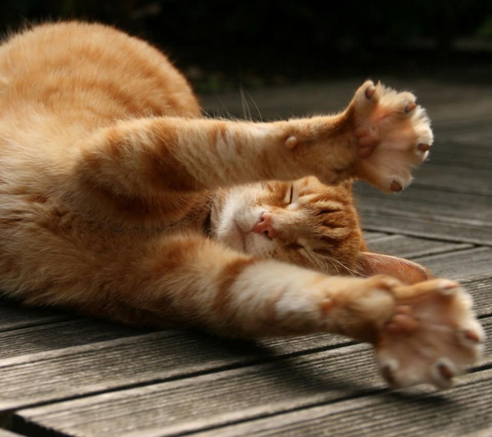 伸びをする三毛猫 Androidスマホ壁紙