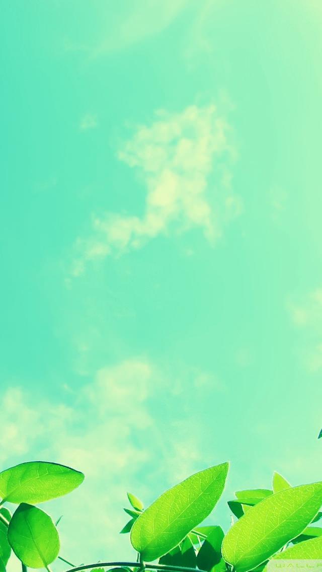 緑日 iPhone5 スマホ用壁紙