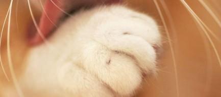 毛づくろいする猫 Androidスマホ壁紙