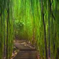 竹林の階段 Androidスマホ壁紙