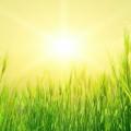 Green Field Androidスマホ壁紙