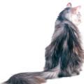 猫の背中 Androidスマホ壁紙