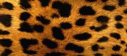 触り心地の良さそうな豹柄 Androidスマホ壁紙